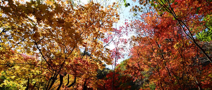 本溪红叶摄影旅游